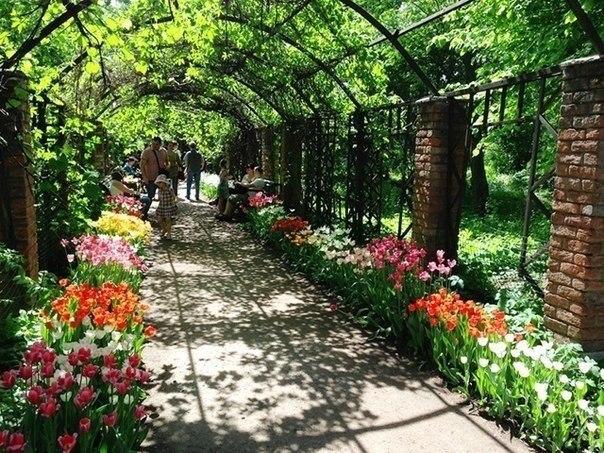 Картинки по запросу 6. Ботанический сад лекарственных растений