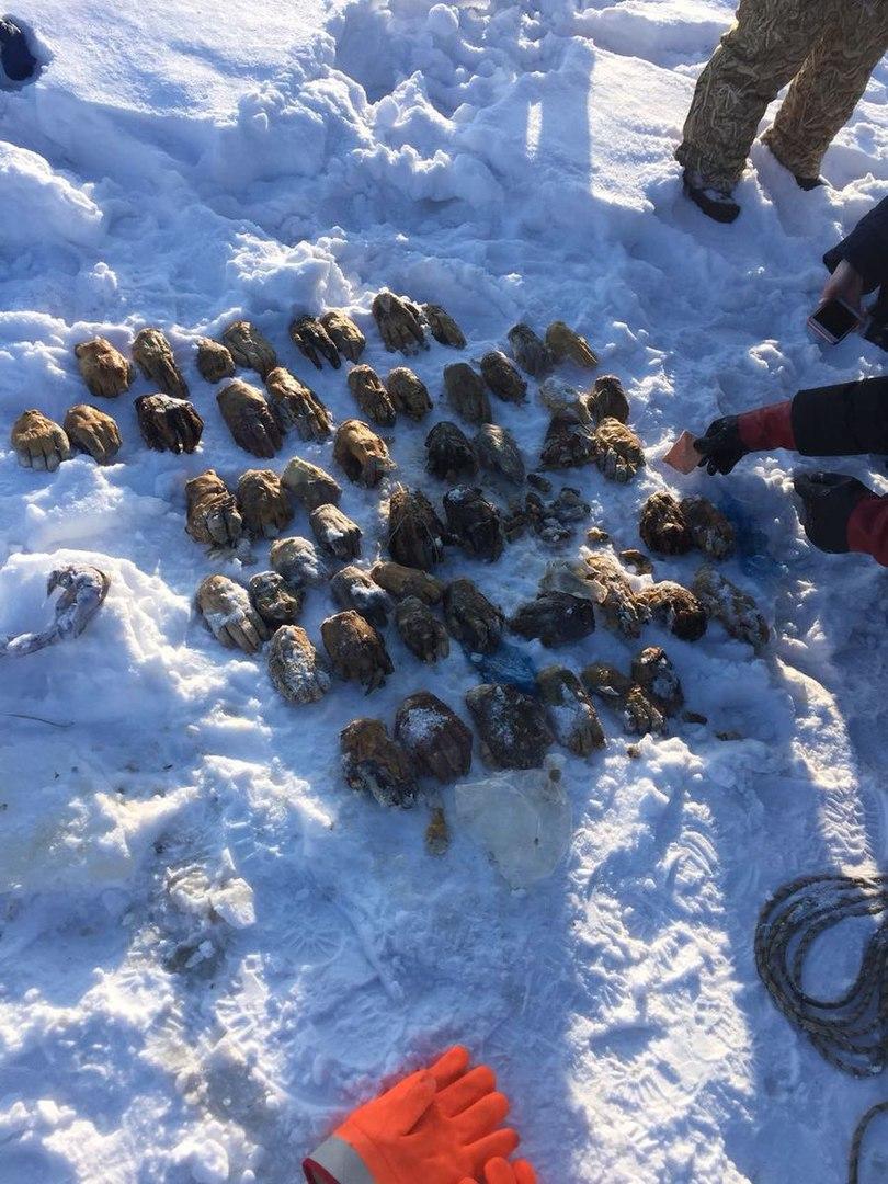 Под Хабаровском найден мешок с 26 парами отрубленных кистей рук
