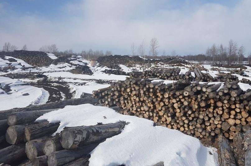 Продали китайцам весь сибирский лес?